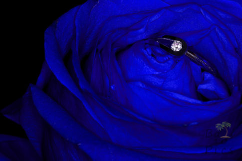 Engagment ring in blue rose