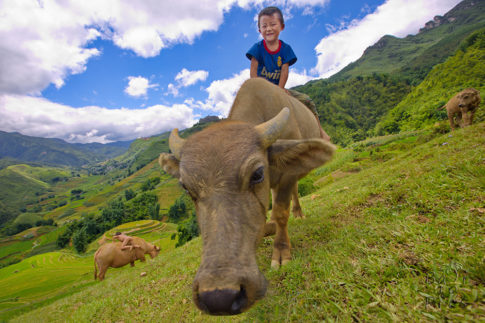 Boy and buffalo