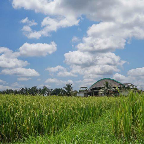 Балийски пейзаж