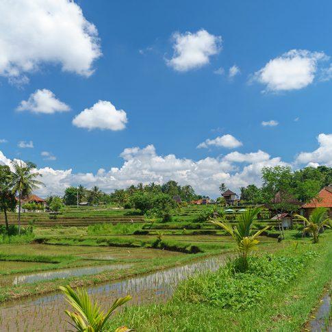 Природа в Бали